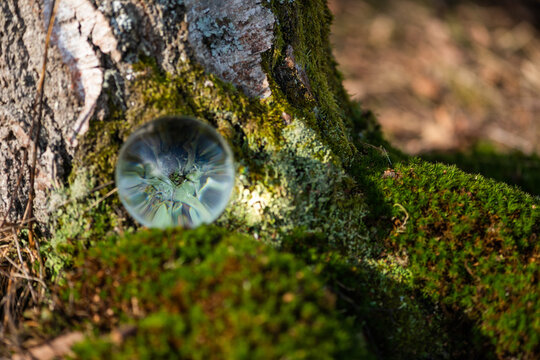 Am Birkenstamm liegt eine Glaskugel und spiegelt Mosse und Flechten.