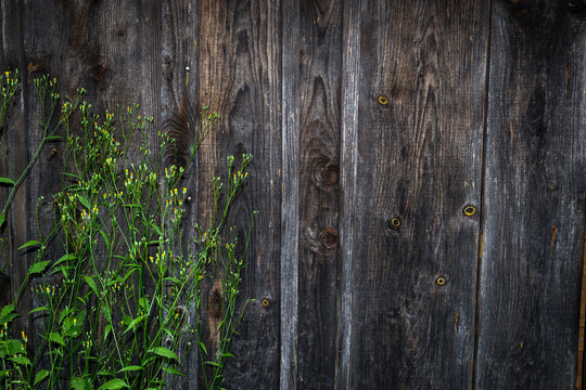 Flowers on a background of a wooden wall. Natural background.