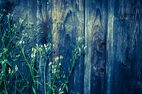 Flowers on a background of a wooden wall. Natural background. Blue.