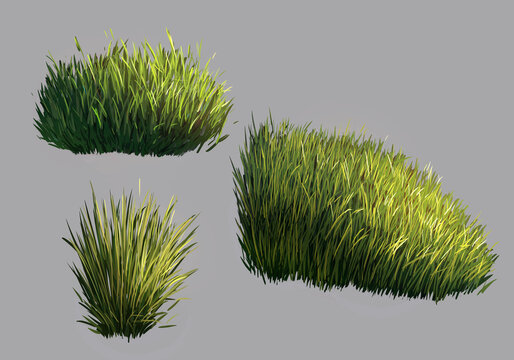illustration of grass isolated on grey background