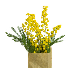 Branches of mimosa flowers in paper bag on white background.