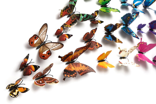 a flock of colorful butterflies isolated on a white background, a blank for the designer, a place for text, copyspace