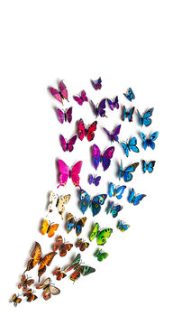 a flock of colorful butterflies isolated on a white background, a blank for the designer, a place for text, copyspace. tropical rare species of butterflies fly in different directions.