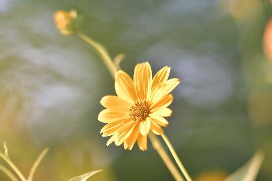 Fiore giallo su sfondo naturalistico