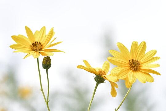 Tanti fiori gialli