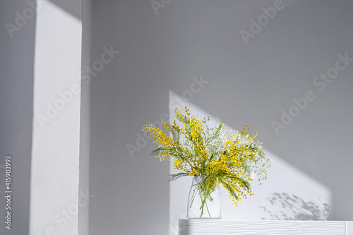 Acacia dealbata, silver wattle or yellow mimosa flower with white gypsophila in glass vase on white home interior. Authentic photo. Women's day, mother's day. Spring time. Hard shadows