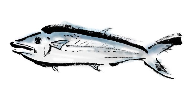 サワラという魚の和風手描きイラスト素材