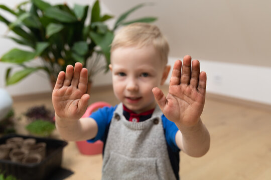 Horticulture learning botany at home - Young boy showing dirty hands after planting seeds. Hobbies at gardening.