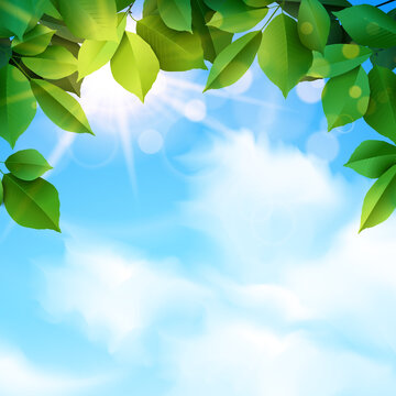 green leaves and sunbeams spring background