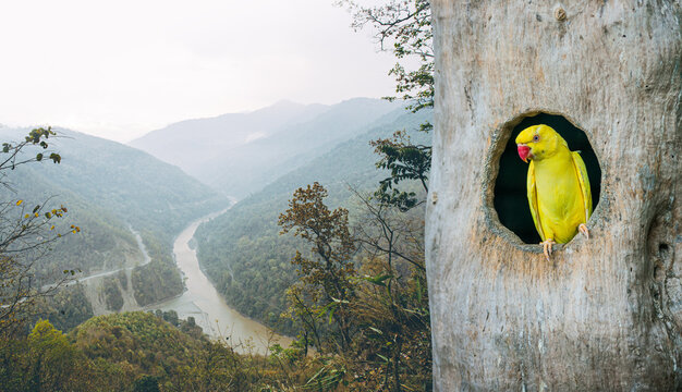 A picture of a parrot in the nest Rich forest scene