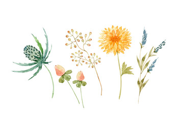 set of delicate watercolor flowers and twigs on a white background, hand painted for cards and invitations