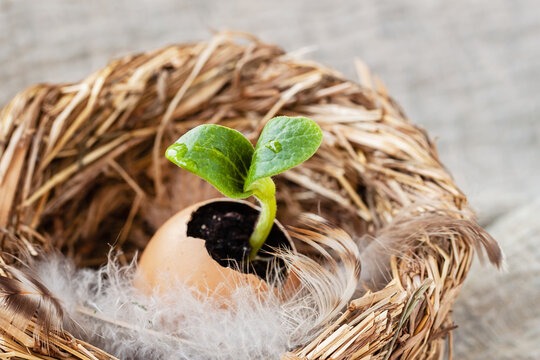 Nest with feathers and egg with green fragile tender sprout. New life, birth, spring and Easter concept