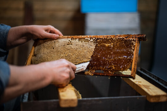 An elderly beekeeper works with frames for honey. Manual labor in the apiary.