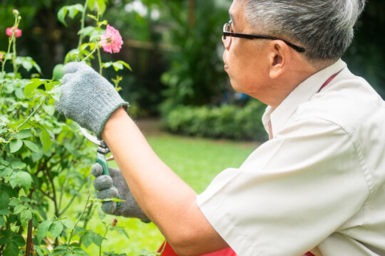 A happy and smiling Asian old elderly man is pruning twigs and flowers for a hobby after retirement in a home. Concept of a happy lifestyle and good health for seniors.