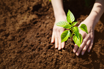 Human hands taking care of a seedling in the soil