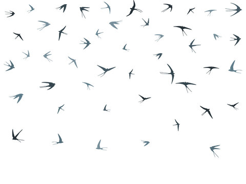Flying swallow birds silhouettes vector illustration. Nomadic martlets school isolated on white.