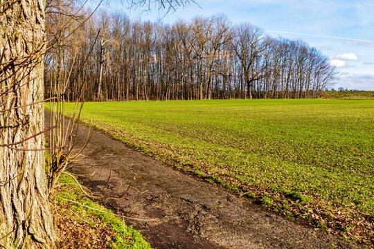 Lülsdorfer Weiden als Auwald und Retentionsfläche mit Damm zwischenLülsdorf und Langel