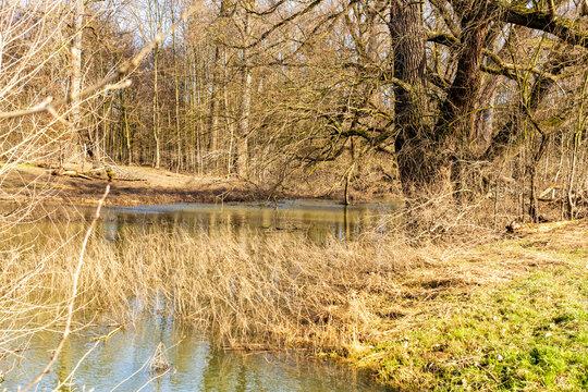 Langeler Auenwald im Ortsteil Langel von Köln mit ablaufendem Hochwasser des Rheins