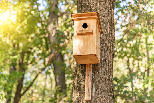 Wooden birdhouse for birds on a tree in the park.