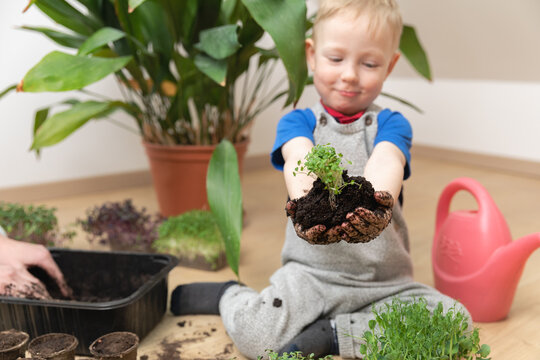 Growth at home gardening and learning botany concept. Young boy proudly holding seedlings and soil in hands.