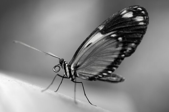 Growing butterflies for business in Mindo, Ecuador