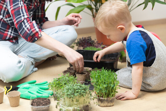 Child boy seeding seeds. At home gardening and learning botany. Sensority and spring time activities.