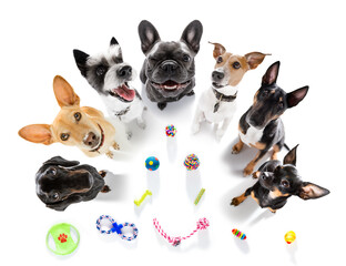 group of dogs playing with toys
