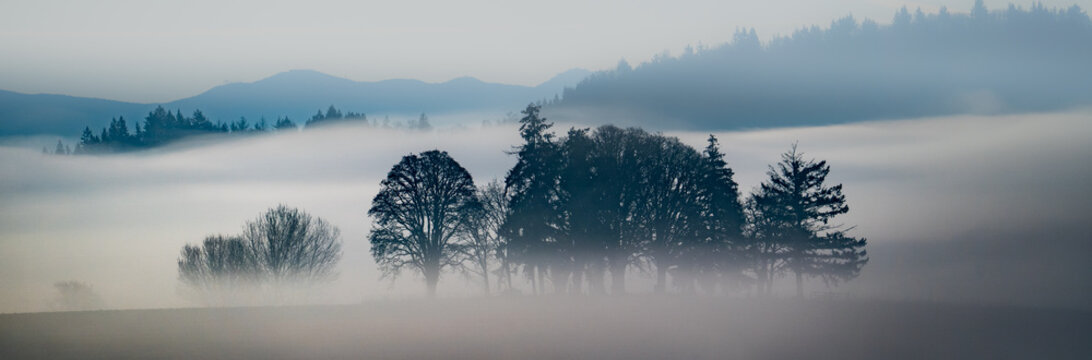 oak trees silhouettes surrounded by fog on a clear morning in an agricultural area near Jefferson, Oregon