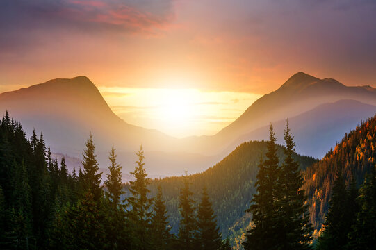 Sunset landscape with high peaks and foggy valley with autumn spruce forest under vibrant colorful evening sky in rocky mountains.