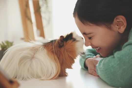Happy little girl with guinea pig at home. Childhood pet