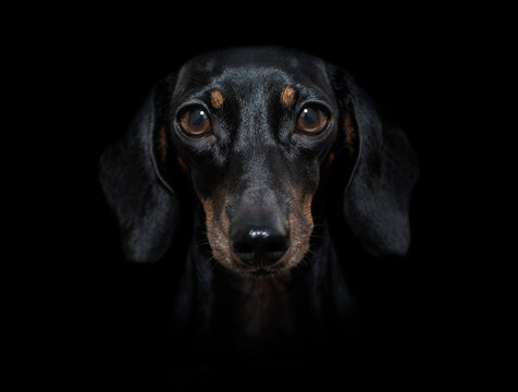 dog isolated on black dramtic dark background