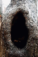 trunk of a tree