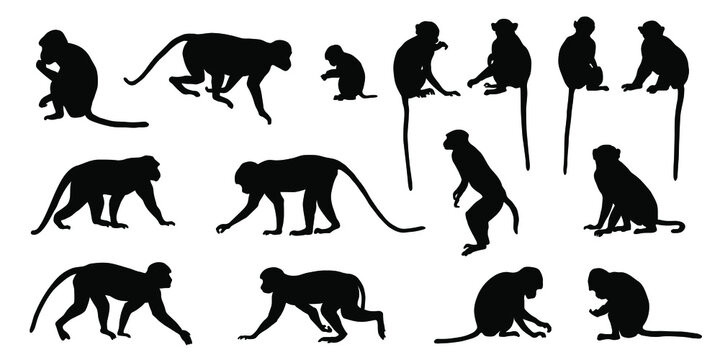 various macaque silhouettes on the white background