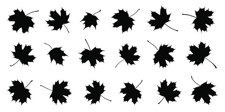 various maple sugar leaf silhouettes on the white background