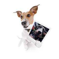 dog holding a photogrpah of a dog