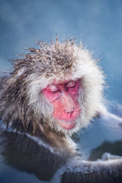 Japanese macaque taking a relaxing bath in a hot spring