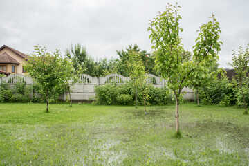 Fototapeta The garden and courtyard are flooded. Consequences of downpour, flood. In the background is a hous. Rainy summer or spring