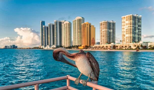 animal pelican bird views beautiful beach sunny isles florida usa sea horizon hotels apartments buildings summer cute cloud blue sky