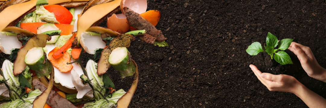 Organic waste for composting on soil and woman taking care of seedling, top view. Natural fertilizer