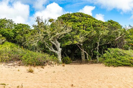 Vegetation around a beach in Lagoa do Patos lake