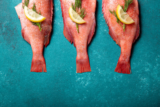 Fresh red sea bass on blue background