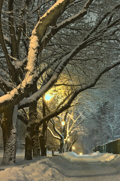A snow-covered avenue of trees lit by lanterns