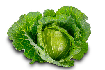 Fototapete - Freshly harvested cabbage on white background with clipping path.