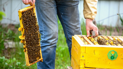 Beekeeper is working with bees and beehives on apiary. Bees on honeycomb. Frames of bee hive. Beekeeping. Honey. Healthy food. Natural products.
