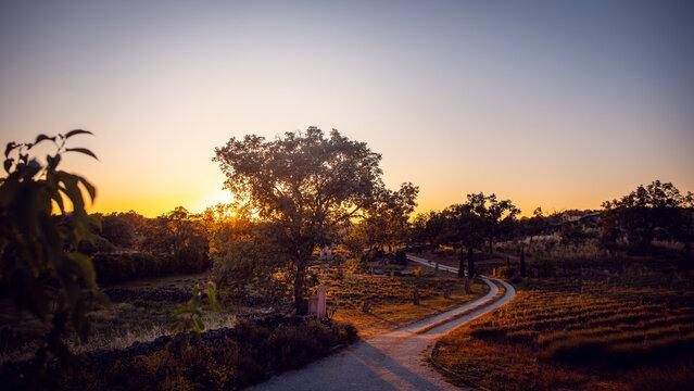 Rural landscape in Alentejo, Portugal during sunset