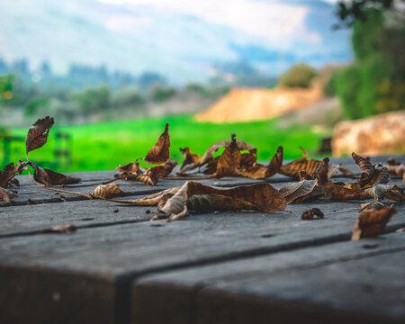 dry leafs on Autumn