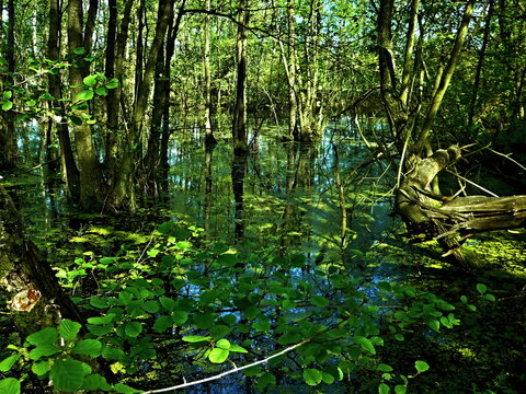 Czech Republic-view of the wetland in a nature reserve near Pametnik