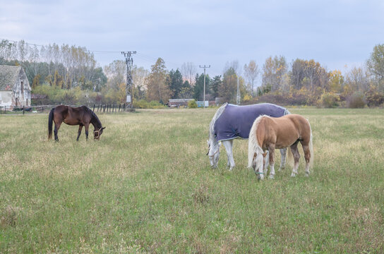 Horses on a daily pasture on a backpack near the city of Novi Sad, Serbia
