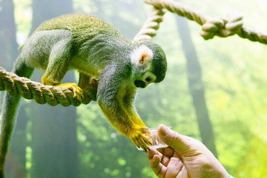 Man feeding a monkey,