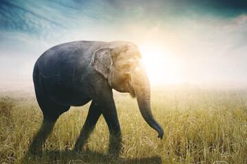 Female elephant walking in the savanna